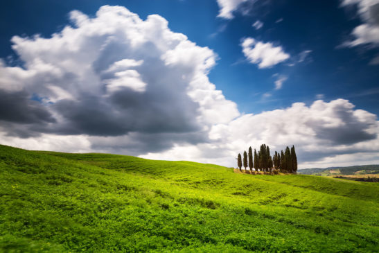 Cypress trees Val d'Orcia Tuscany Italy landscape