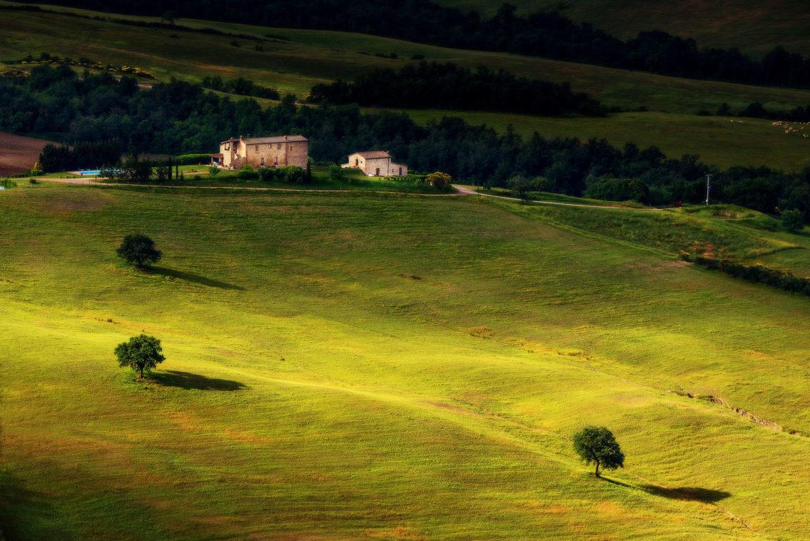 Three trees in Tuscany Italy landscape