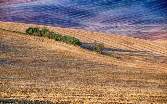 Moravia in the morning landscape