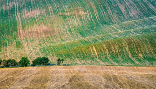 Summer in Moravia landscape
