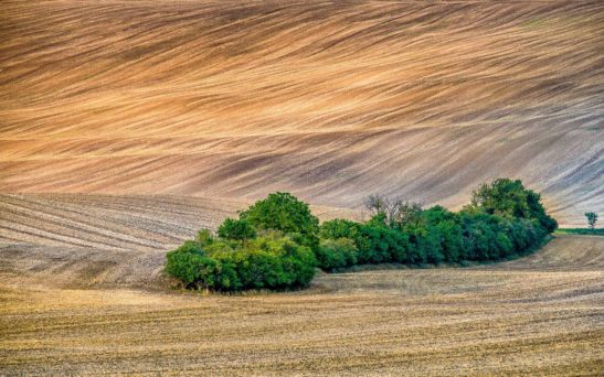 Trees in Moravia landscape